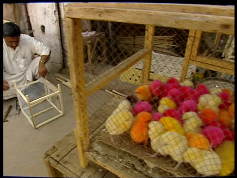 vídeos de stock e filmes b-roll de a man constructs a wooden cage next to a small cage containing chicks some of which are dyed bright colours - galinheiro