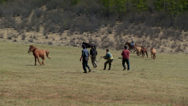 man controlling horse with rope on land during sunny day - ulaanbaatar, mongolia - ulan bator stock videos & royalty-free footage