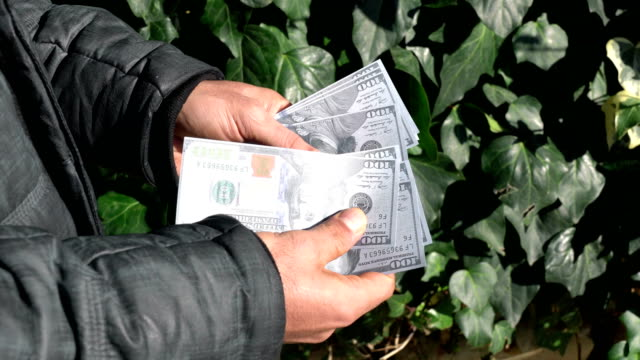 Man counts  dollars in back park alley