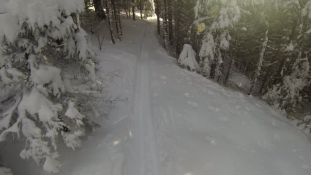 Man cross-country skiing amongst the trees on a snow covered mountain.  - 1920x1080