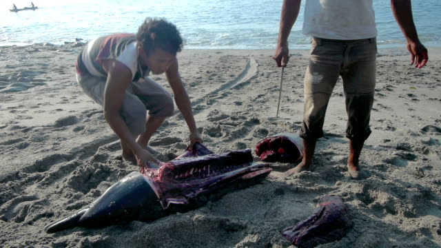 man cuts large chunk of skin and meat from dolphin on the beach at lamalera, indonesia - cetacea stock videos & royalty-free footage