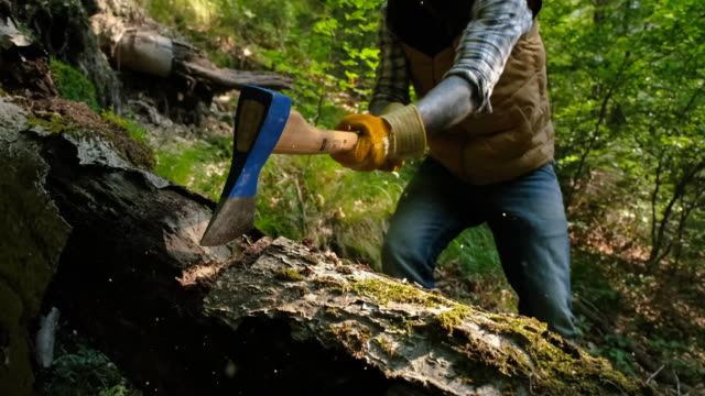 man cutting a tree in the forest - lumber industry stock videos & royalty-free footage