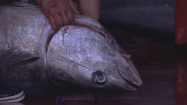 vídeos de stock e filmes b-roll de cu man cutting dead tuna with knife / sardinia, italy - amanhar o peixe