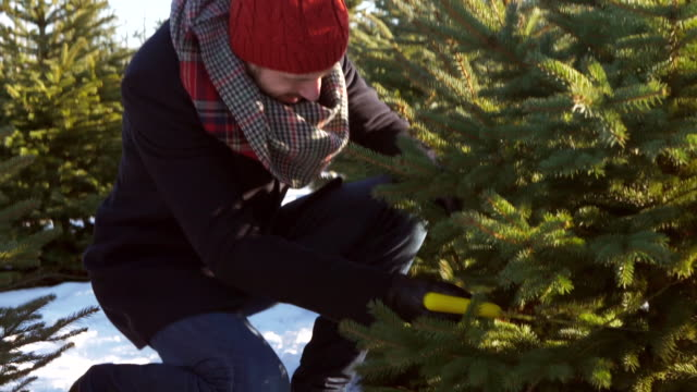 man cutting/ debica/ poland - christmas tree stock videos & royalty-free footage