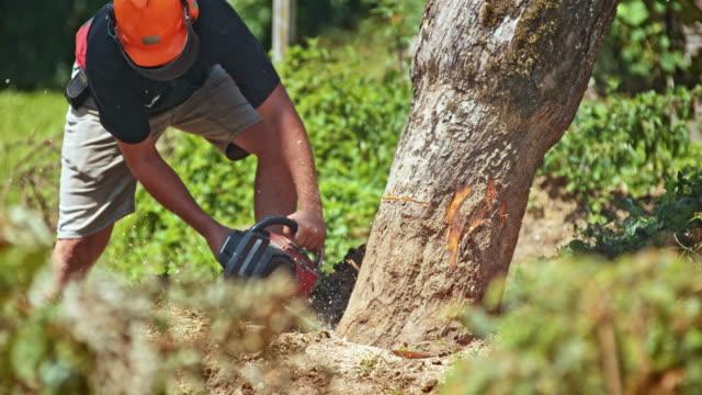 SLO-MO-Mann schneiden einen Baum