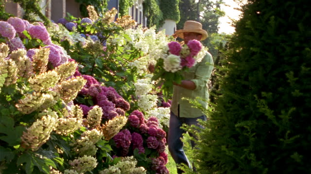 Man cutting flowers from bush surrounding exterior of house and assembling into bouquet / Saint-Ferme, France