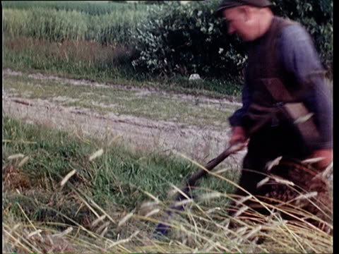 stockvideo's en b-roll-footage met 1937 montage man cutting hay and tractor on field / horst, lower saxony, germany - 1937