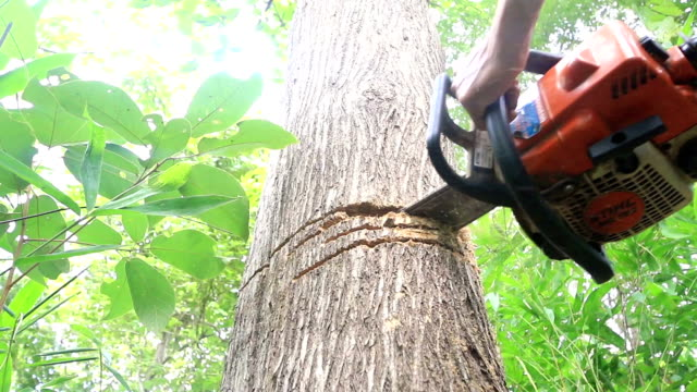 man cutting trees using a chainsaw