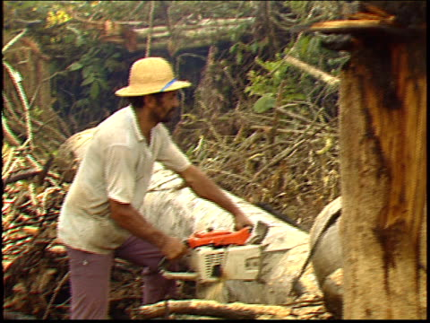 a man cutting up a felled tree in the amazon rainforest - roraima state stock videos and b-roll footage