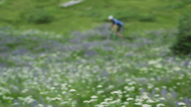 MS FOCUSING TS Man cycling across Alpine meadow, Coast Mountains, Squamish, British Columbia, Canada