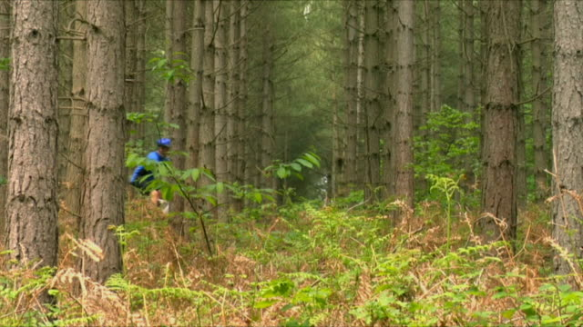 WS Man cycling through woods in Bedgebury Forest / Kent, England, UK