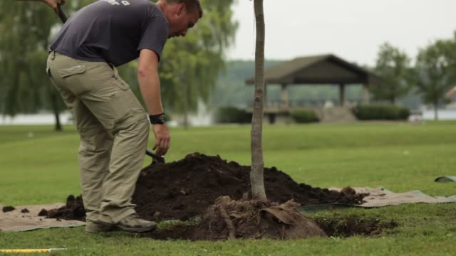 man demonstrating the planting of a tree - 植える点の映像素材/bロール