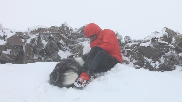 a man digging a shelter on the summit of red screes in the lake district in freezing conditions with  border collie. - collie stock videos & royalty-free footage