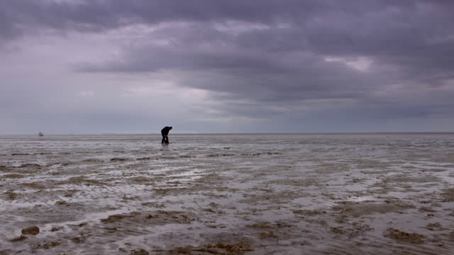 man digs into wet sand of the wash estuary - bay of water stock videos & royalty-free footage