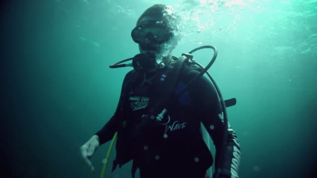 ms man diving in caribbean sea / nassau, new providence, bahamas  - scuba diving stock videos & royalty-free footage