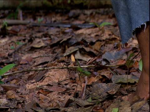 man drives wooden stake into soft forest floor in preparation for building camp amazon rainforest venezuela - erektion stock-videos und b-roll-filmmaterial