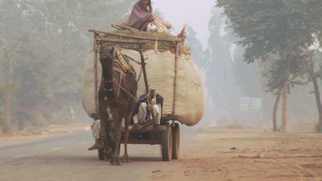 ms zo man driving camel cart on road / alwar, rajasthan, india - arbeitstier stock-videos und b-roll-filmmaterial