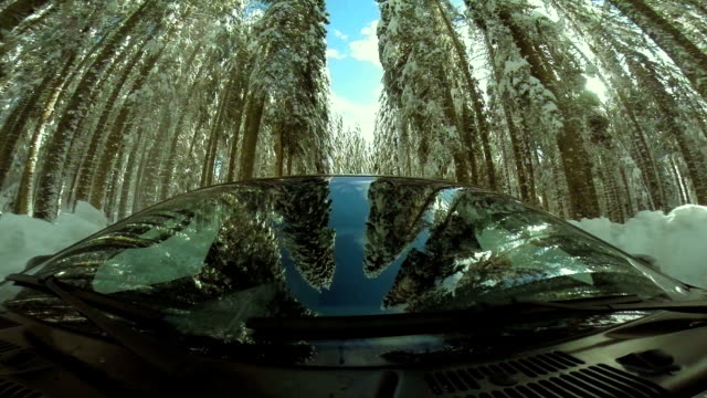 man driving through a snowy forest - dirt track stock videos and b-roll footage