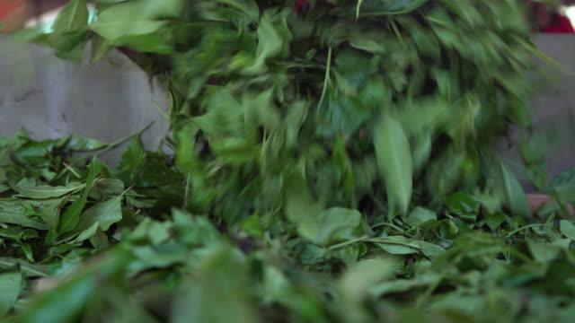 man driying tea leaves at sri lanka plantation - drying stock videos & royalty-free footage
