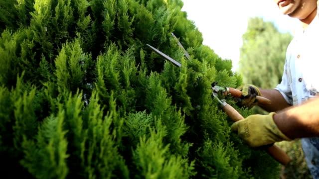 man enjoy pruning tree - pruning stock videos & royalty-free footage