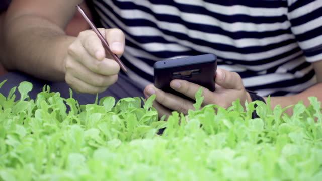 vidéos et rushes de homme examinant des légumes organiques dans la ferme. - salade verte