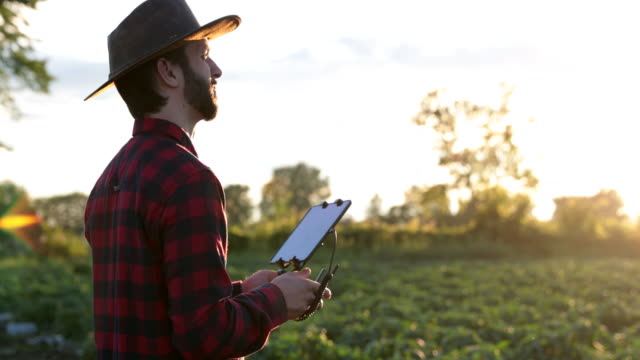 man farmer pilot using drone remote controller at sunset - drone pilot stock videos and b-roll footage