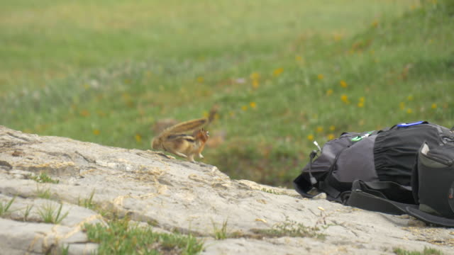 vidéos et rushes de a man feeding a chipmunk while hiking on a trail. - tamia écureuil terrestre