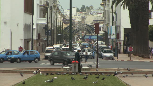 ws man feeding birds on avenue mohamed v, rabat, morocco - rabat morocco stock videos & royalty-free footage