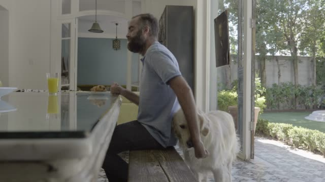 stockvideo's en b-roll-footage met man feeding dog while having breakfast - alleen één mid volwassen man