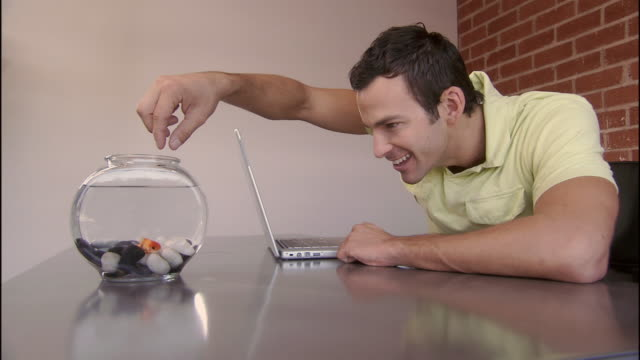 cu, man feeding gold fish in fishbowl at office desk, los angeles, california, usa - nutrire video stock e b–roll