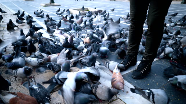 man feeding pigeons in the square - courtyard stock videos & royalty-free footage