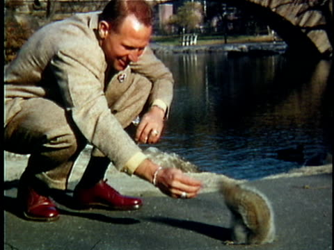 1951 MS COMPOSITE Man feeding squirrels in Central Park, New York City, New York, USA