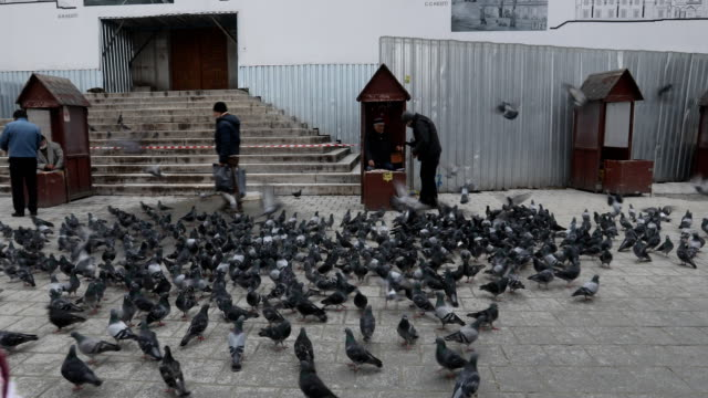 a man feeds birds outside the yeni mosque in eminonu on february 16 2016 in istanbul turkey - yeni cami mosque stock videos and b-roll footage