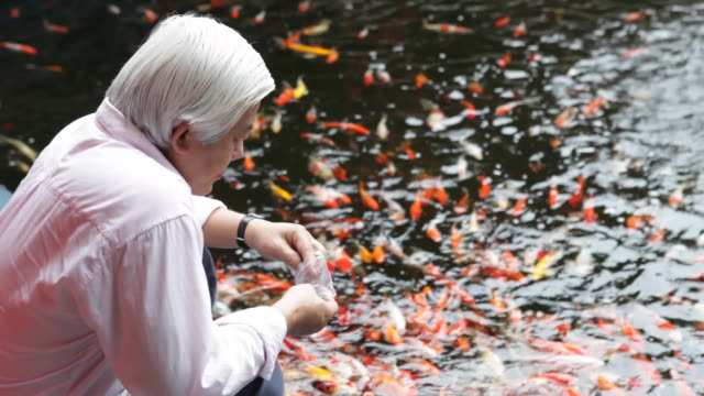 A man feeds koi in a pond.