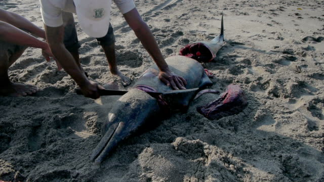 stockvideo's en b-roll-footage met man fillets dolphin on the beach at lamalera, indonesia - flores indonesië