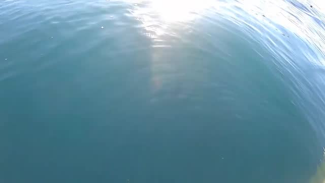 man filmed his close encounter with a trio of orcas while out kayaking off the coastal bluffs of timber cove, california, in search of rockfish and... - surfacing stock videos & royalty-free footage