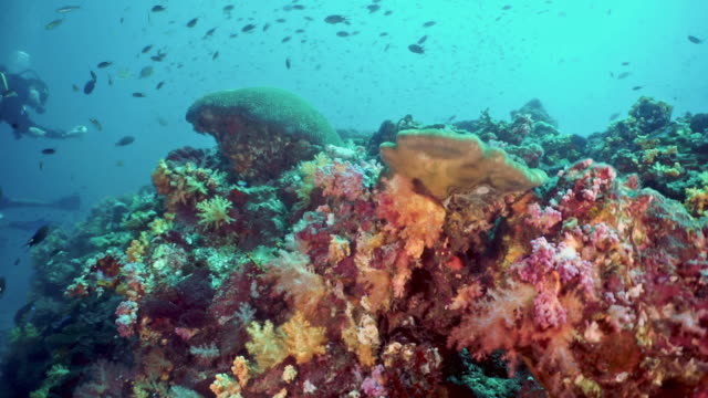 man filming video with waterproof action camera whilst scuba diving on vibrant underwater coral reef - ross sea stock videos & royalty-free footage
