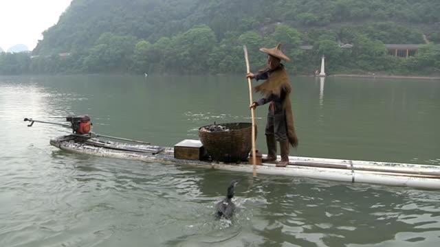 stockvideo's en b-roll-footage met ms man fishing with birds / close to li river, guangxi, china - alleen één mid volwassen man