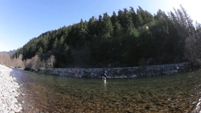 ws fish eye man fly fishing in cheakamus river, squamish, british columbia, canada - shallow stock videos & royalty-free footage