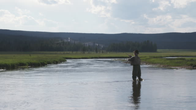 ws man fly-fishing in stream / yellowstone, wyoming, usa - walking in water stock videos & royalty-free footage