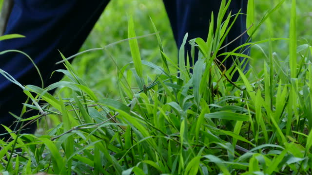 Man gardener mowing overgrown green grass with hoe