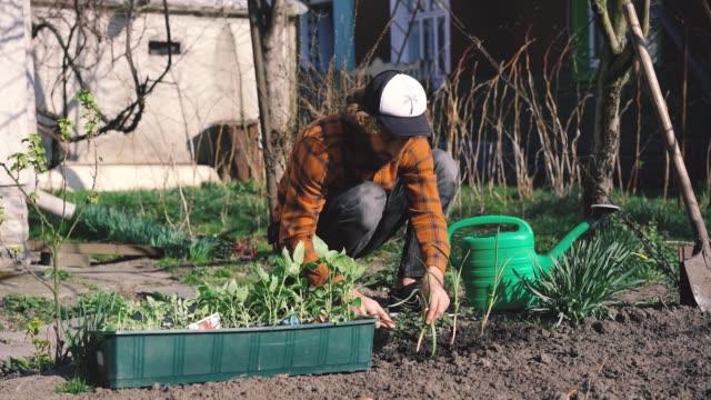 man gardening in yard   during quarantine covid-19 - gardening stock videos & royalty-free footage