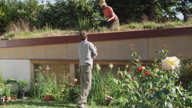 ms zo ws man giving tray of plants to woman on green roof and planting flowers in garden below / seattle, washington, usa - blumenbeet stock-videos und b-roll-filmmaterial