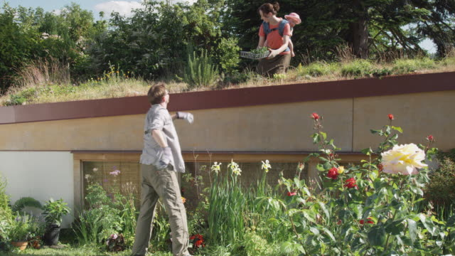 MS ZO WS Man giving tray of plants to woman with baby on green roof and planting flowers in garden below / Seattle, Washington, USA