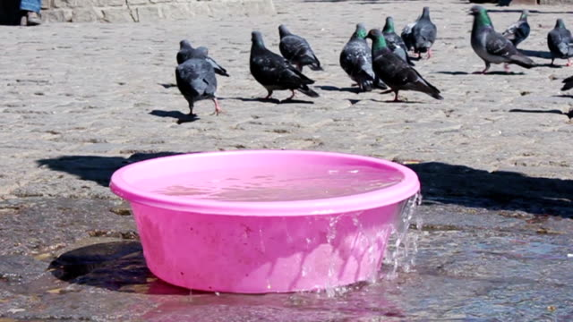 man giving water to pigeons - washtub stock videos and b-roll footage