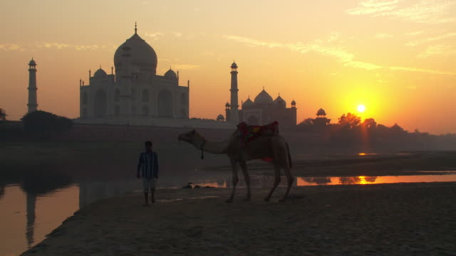 stockvideo's en b-roll-footage met man guiding a camel with the taj mahal and sunset in the background. - alleen één mid volwassen man