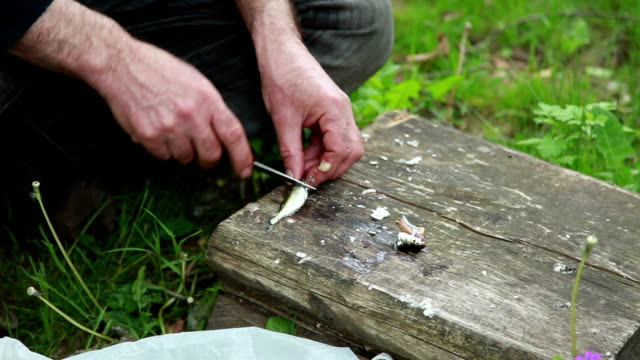 vídeos de stock e filmes b-roll de man gutting a tiny fish in the backyard - amanhar o peixe
