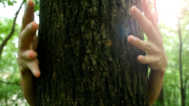 man hand hugging tree in forest - hiding stock videos & royalty-free footage