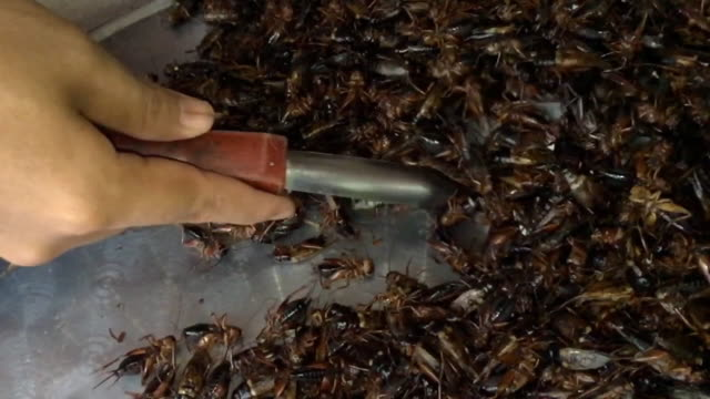man hand with ladle scoop up boiled cricket insects - cricket insect stock videos and b-roll footage