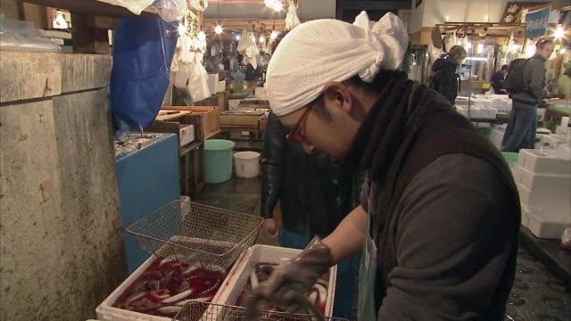 vídeos de stock e filmes b-roll de cu td man handling eels, tsukiji fish market, tokyo, japan - feirante